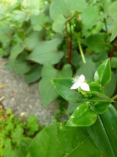 GW サージュと新緑と植物と♪_a0165160_7374426.jpg