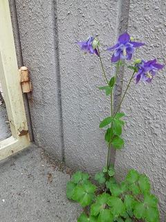 GW サージュと新緑と植物と♪_a0165160_7395221.jpg