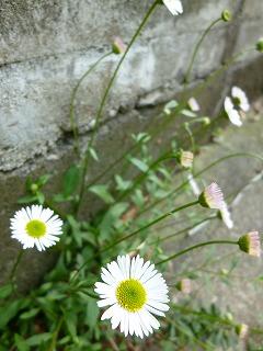 GW サージュと新緑と植物と♪_a0165160_7531813.jpg