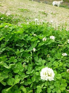 GW サージュと新緑と植物と♪_a0165160_910289.jpg