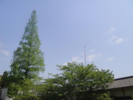 孝子の森の植物観察  &  ボランティア3グループ交流会_c0108460_21204426.jpg