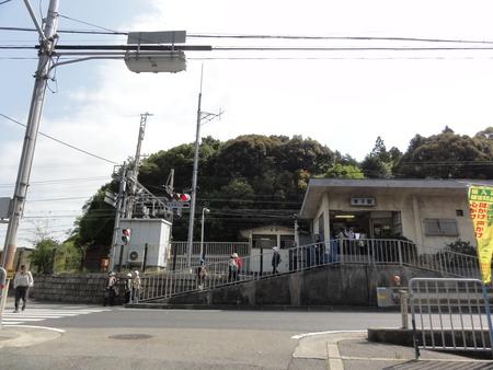 孝子の森の植物観察  &  ボランティア3グループ交流会_c0108460_21214121.jpg