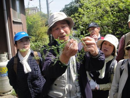 孝子の森の植物観察  &  ボランティア3グループ交流会_c0108460_21244475.jpg