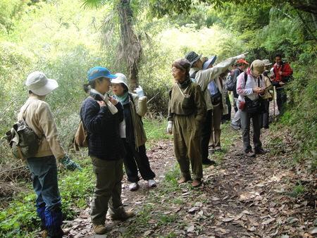孝子の森の植物観察  &  ボランティア3グループ交流会_c0108460_21254873.jpg