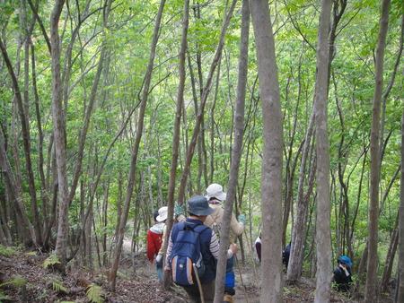孝子の森の植物観察  &  ボランティア3グループ交流会_c0108460_21384553.jpg