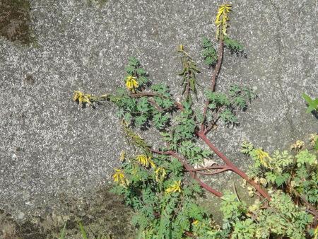 孝子の森の植物観察  &  ボランティア3グループ交流会_c0108460_21425968.jpg