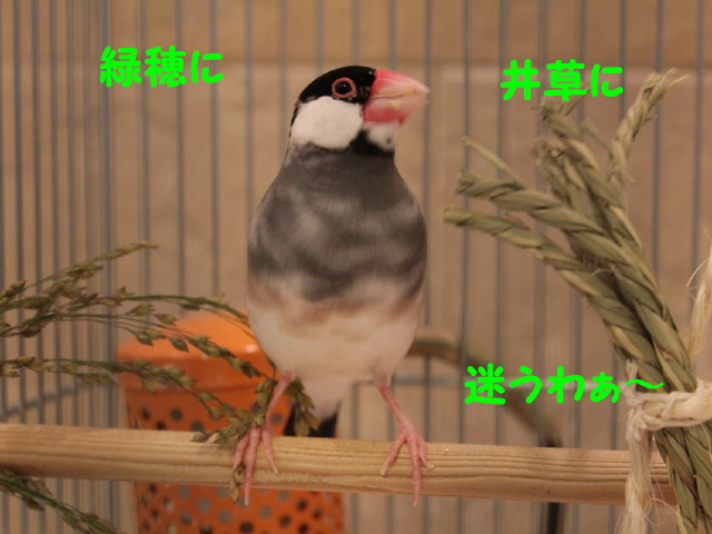 b0158061_22552255.jpg
