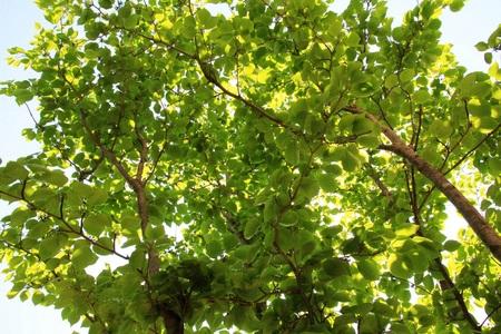 新緑の季節_a0107574_19244667.jpg