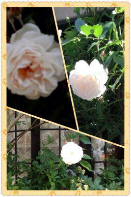 HANAMOMENのお庭_a0059281_12341131.jpg