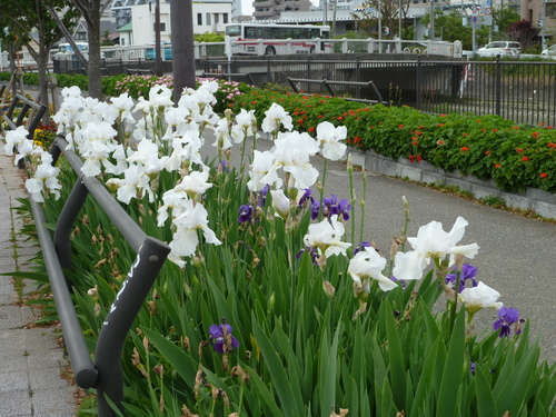 まだまだ、花が沢山。_f0166694_21203156.jpg