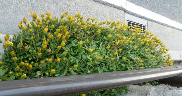 まだまだ、花が沢山。_f0166694_2123216.jpg