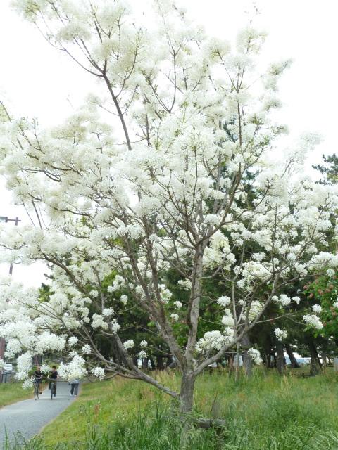 まだまだ、花が沢山。_f0166694_21292442.jpg