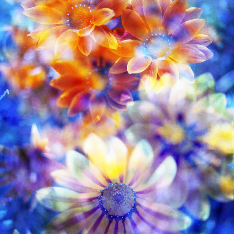 Bouquet d\'Amour_f0161595_1622999.jpg
