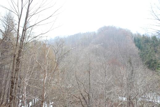 きこりの森に下見に行ってきました_f0227395_18112429.jpg