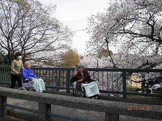 お花見<アクティブライフ神戸>_c0107602_1028440.jpg