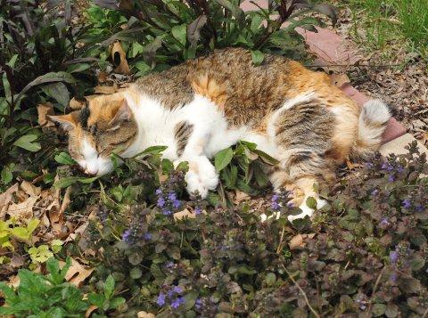 花壇の中の、見慣れない植物_b0253205_2561215.jpg