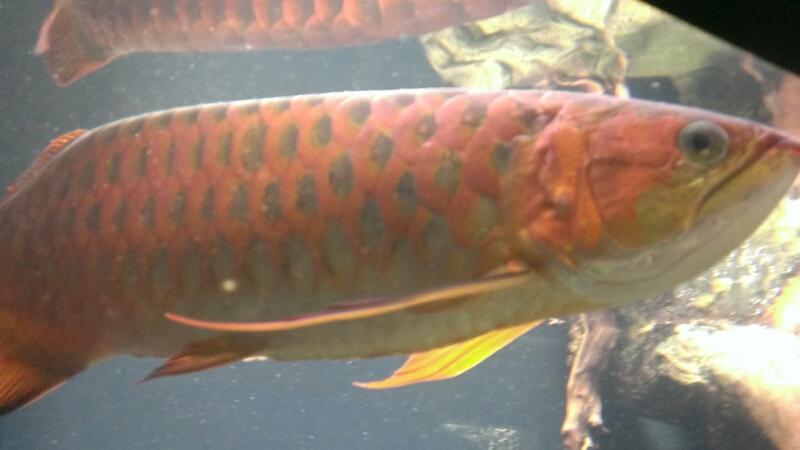 ワイキキ水族館_f0253407_23191479.jpg