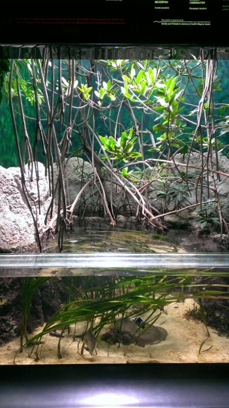 ワイキキ水族館_f0253407_23202080.jpg