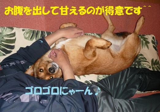 f0121712_6401277.jpg