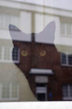 巨大ネコあらわる!?_e0114020_618461.jpg