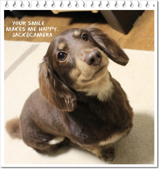 ダックスフンドのサマーカット ハンドメイド犬服 Jackcamera