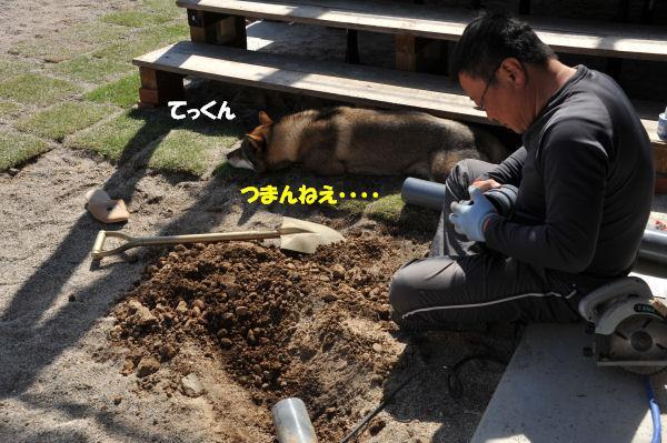 f0143123_20113589.jpg