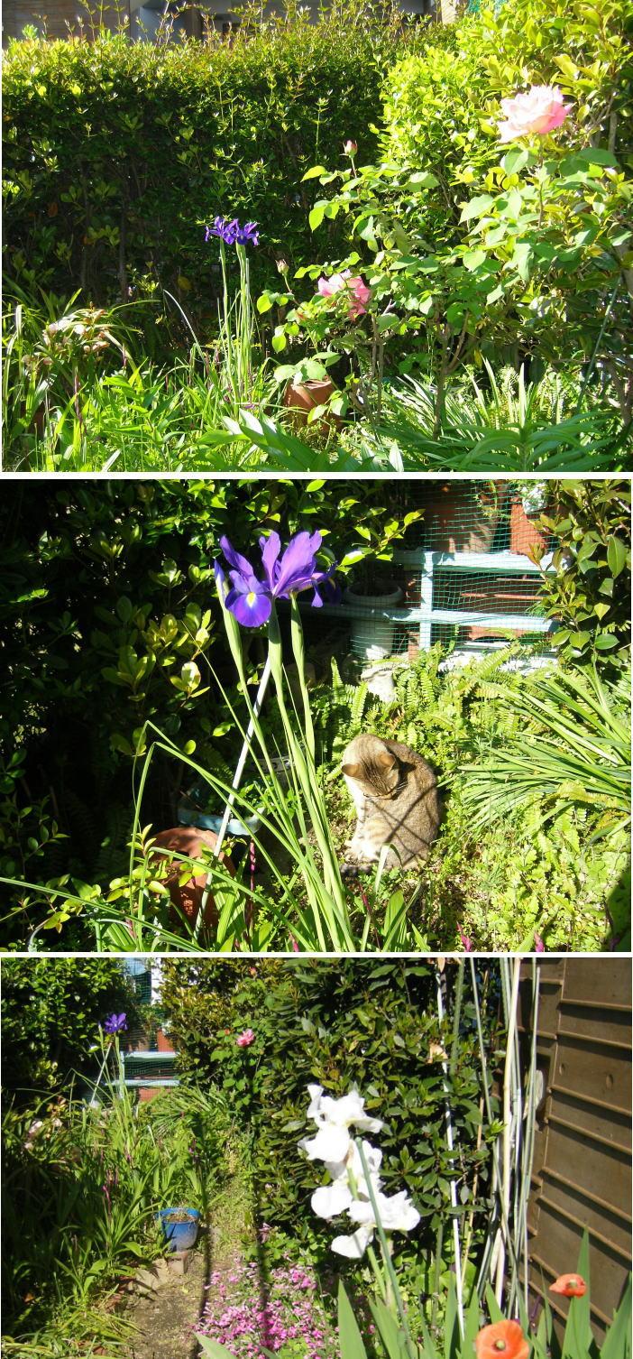 我が家の5月の庭_b0096638_13443799.jpg