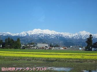 富山地鉄の花便り2013@チューリップと菜の花_a0243562_12394620.jpg
