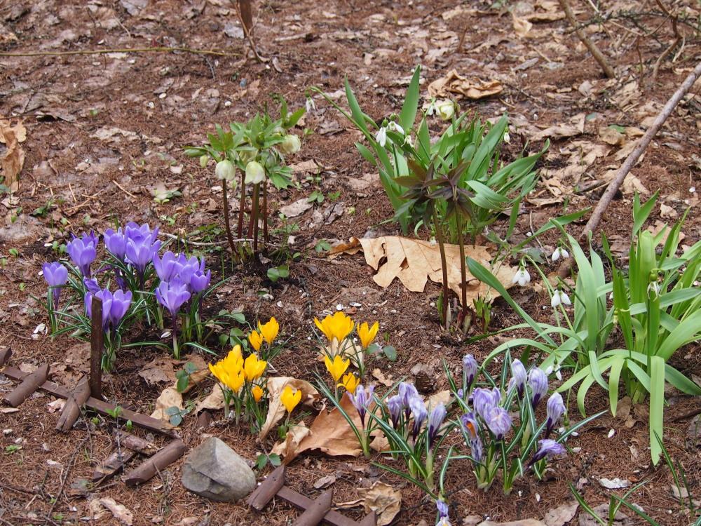 寒いG.W.だけど・・カンタベリーの春の花は順調に咲いています。_f0276498_23452123.jpg