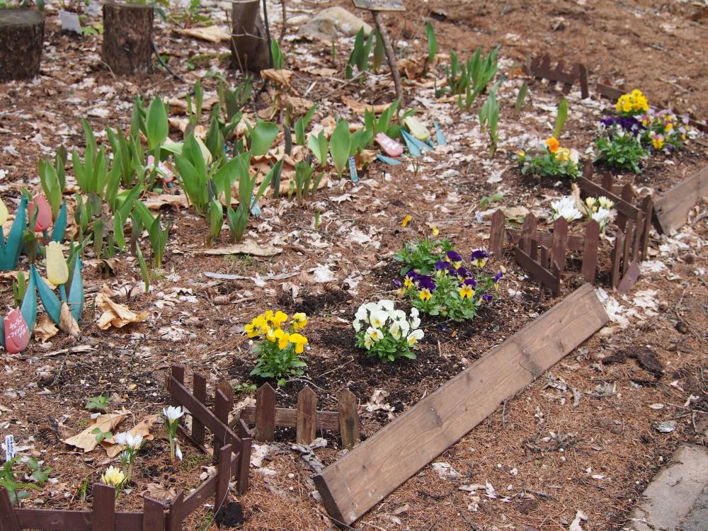 寒いG.W.だけど・・カンタベリーの春の花は順調に咲いています。_f0276498_23453536.jpg