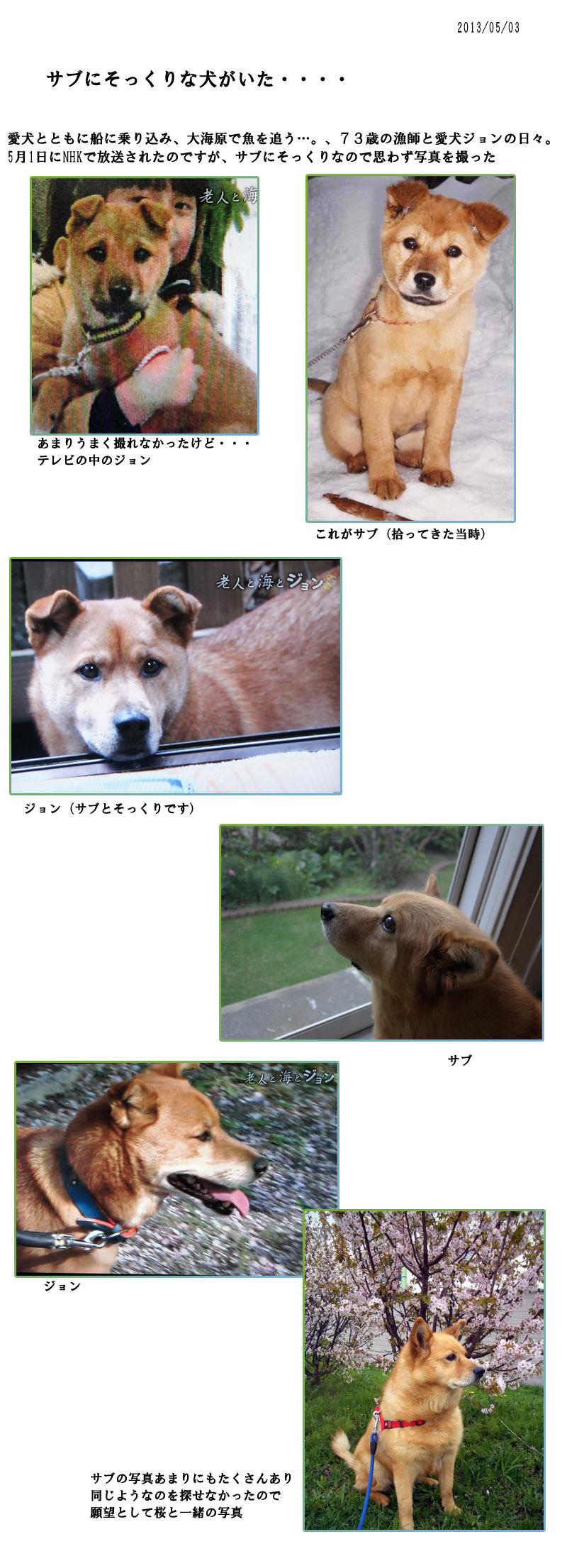 サブにそっくりの犬がいた_b0019313_17423857.jpg