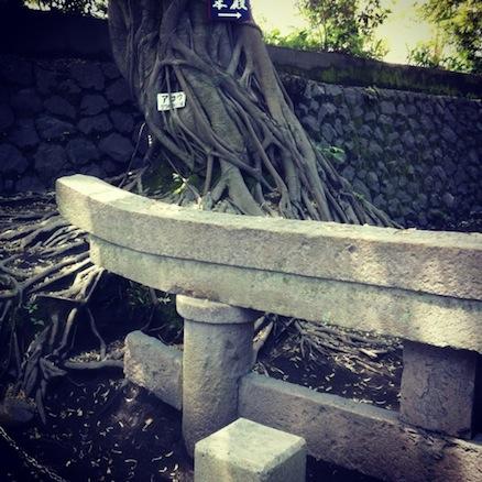 桜島_b0072234_22374674.jpg