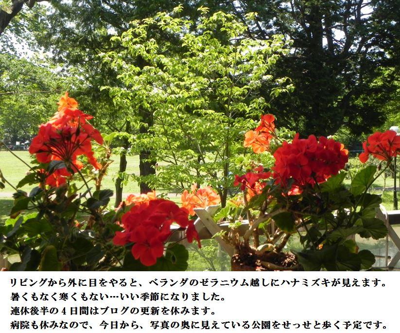 d0164636_6592030.jpg
