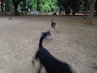 代々木公園にて_b0132442_2251553.jpg