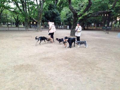 代々木公園にて_b0132442_22515791.jpg
