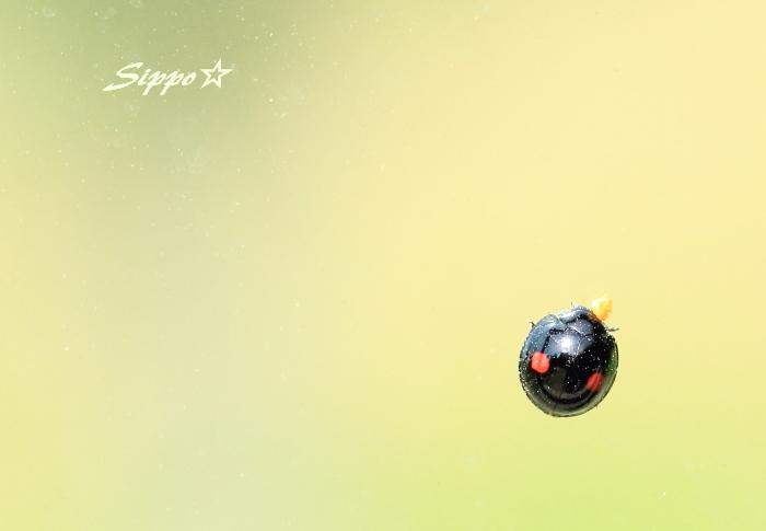 ■■ Sippo☆流 おえかき ~初夏~ ■■_c0195662_22401751.jpg