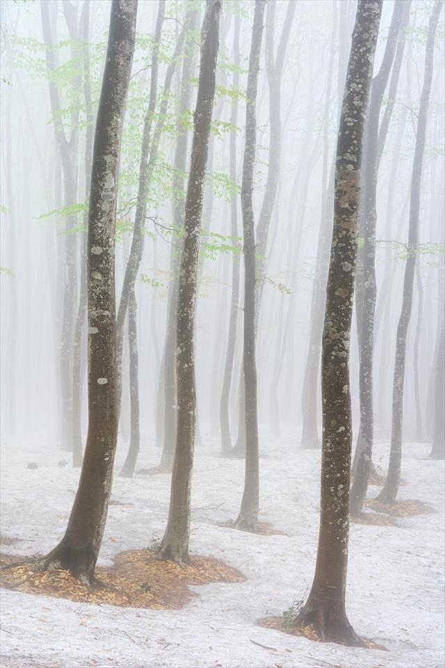 霧の美人林 2_f0018464_19261429.jpg