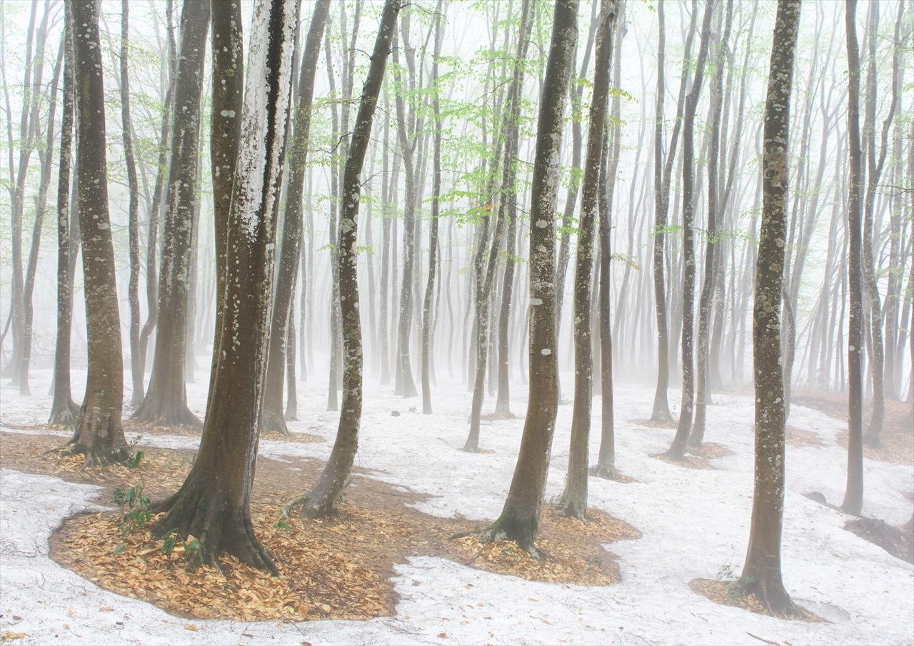 霧の美人林 2_f0018464_1950123.jpg