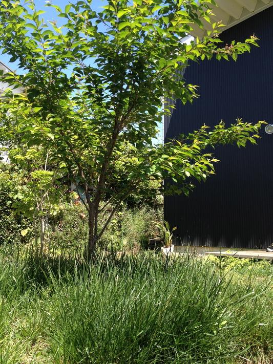 芝生について_d0021969_9483529.jpg
