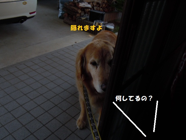 f0114128_1733096.jpg