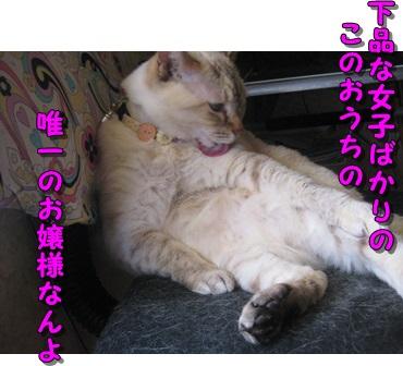 b0151748_213064.jpg