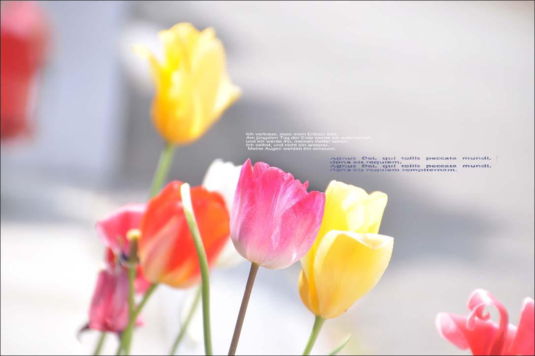 f0198771_05243.jpg