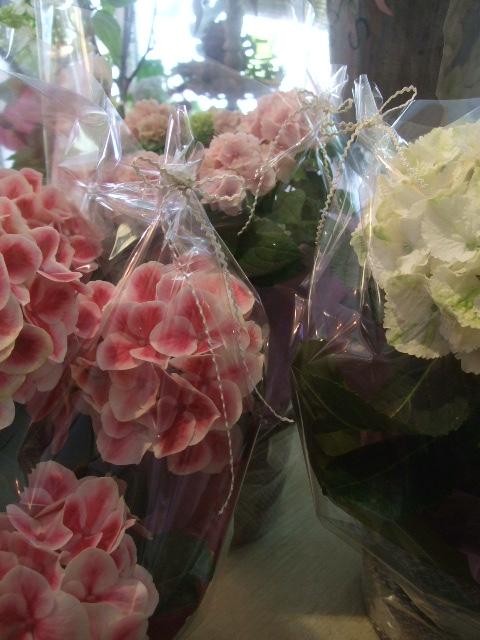 オークリーフ(おすすめの花鉢アジサイ)_f0049672_17155629.jpg