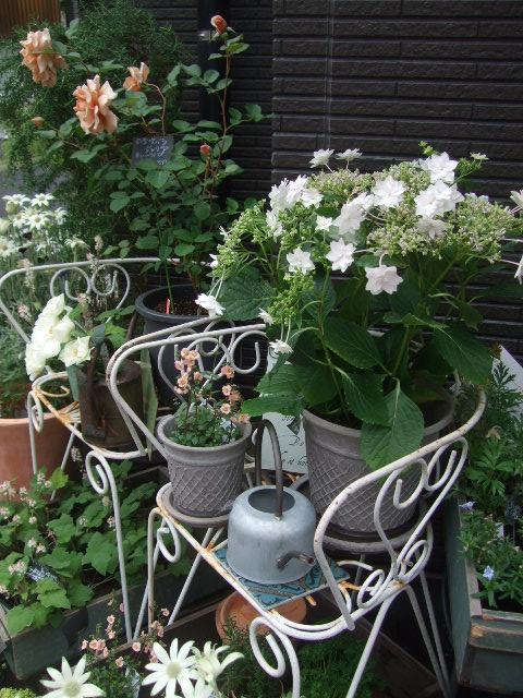 オークリーフ(おすすめの花鉢アジサイ)_f0049672_1775788.jpg