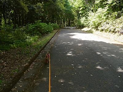 広い公園、いつもと違うコースを歩いてみました、大分の高尾山自然公園です_b0175688_13344621.jpg