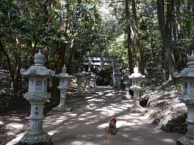 広い公園、いつもと違うコースを歩いてみました、大分の高尾山自然公園です_b0175688_13374079.jpg