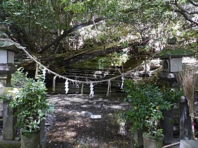 広い公園、いつもと違うコースを歩いてみました、大分の高尾山自然公園です_b0175688_13394396.jpg
