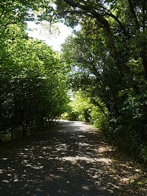 広い公園、いつもと違うコースを歩いてみました、大分の高尾山自然公園です_b0175688_13523298.jpg