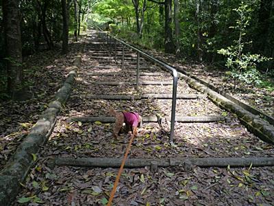 広い公園、いつもと違うコースを歩いてみました、大分の高尾山自然公園です_b0175688_13532785.jpg