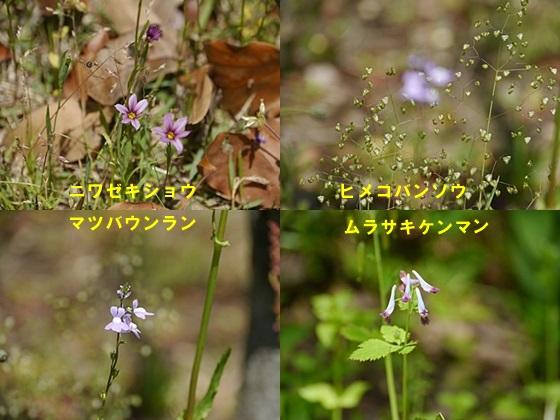 広い公園、いつもと違うコースを歩いてみました、大分の高尾山自然公園です_b0175688_147080.jpg